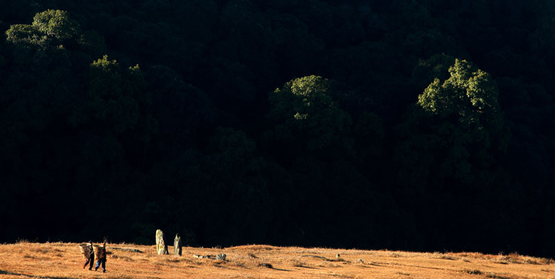 Sacred-Forest-1