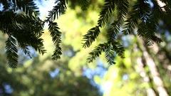 w-leaf-1