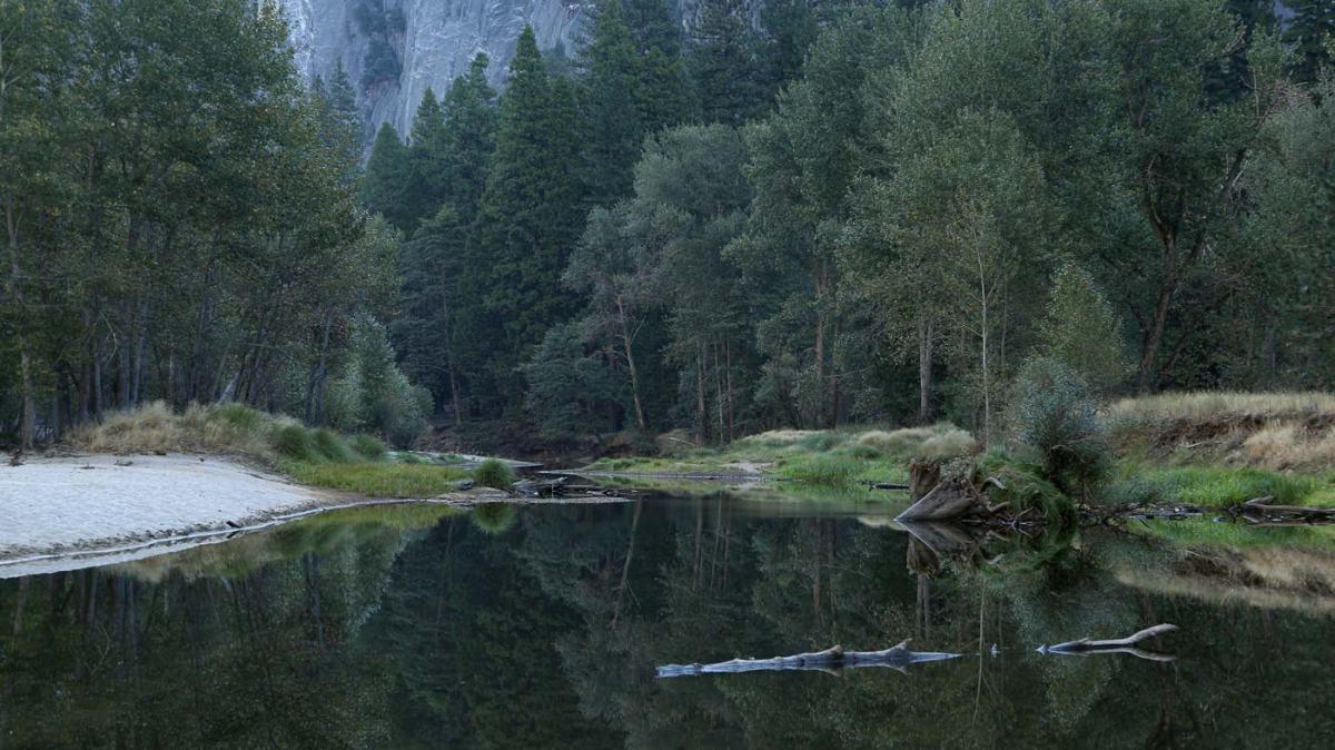 Forest Meditation and the Wavering Mind