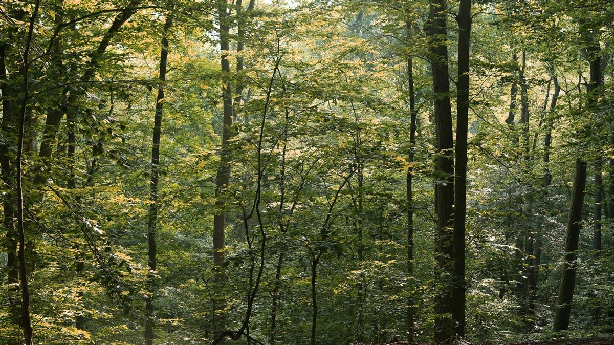 Iemon-trees-w