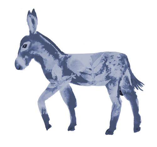 animal-Donkey
