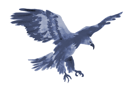 animal-Eagle