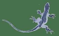 animal-Lizard