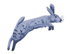 animal-rabbit