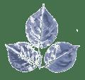 Leaf-02