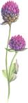 wild-flower-1.png