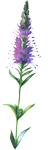 wildflower-2.png