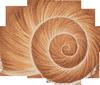 snail-shell-spiral