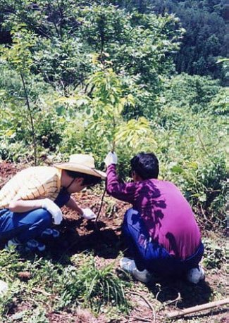 Planting trees as therapy for mental disability