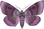 43-butterfly-1