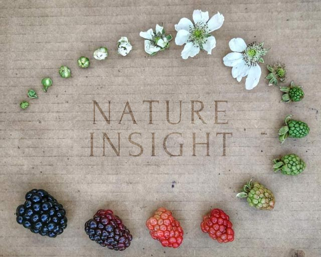 Nature insight