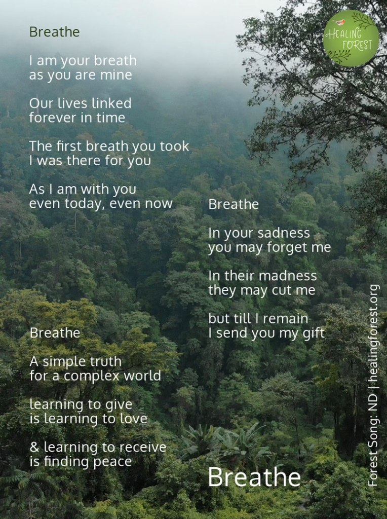Nature Poem Healing Forest Are they because, we, human beings have five. nature poem healing forest